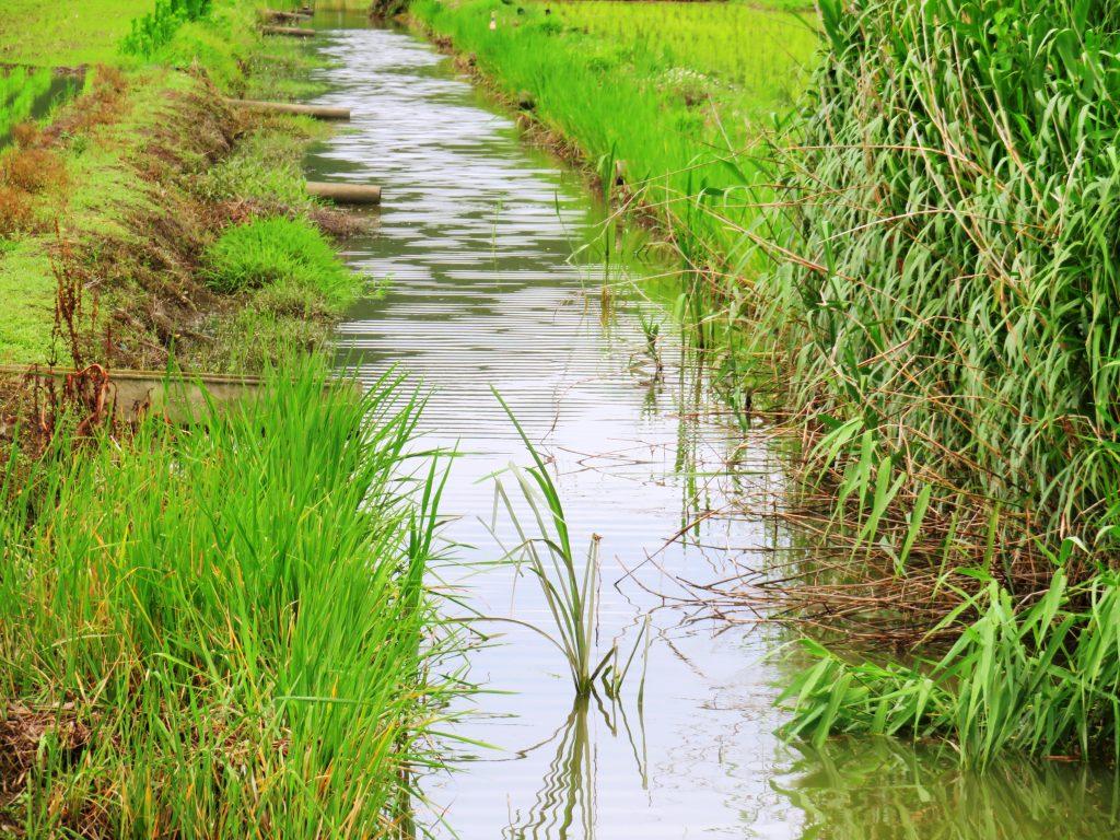 梅雨の頃の川