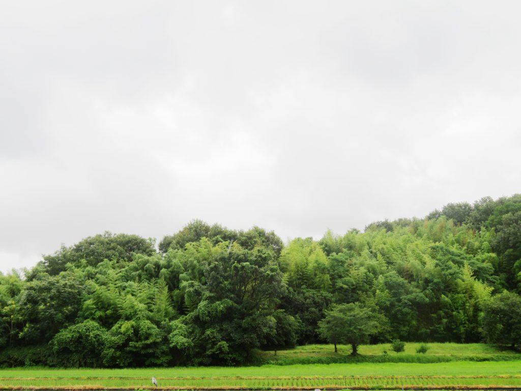 梅雨の田舎の風景