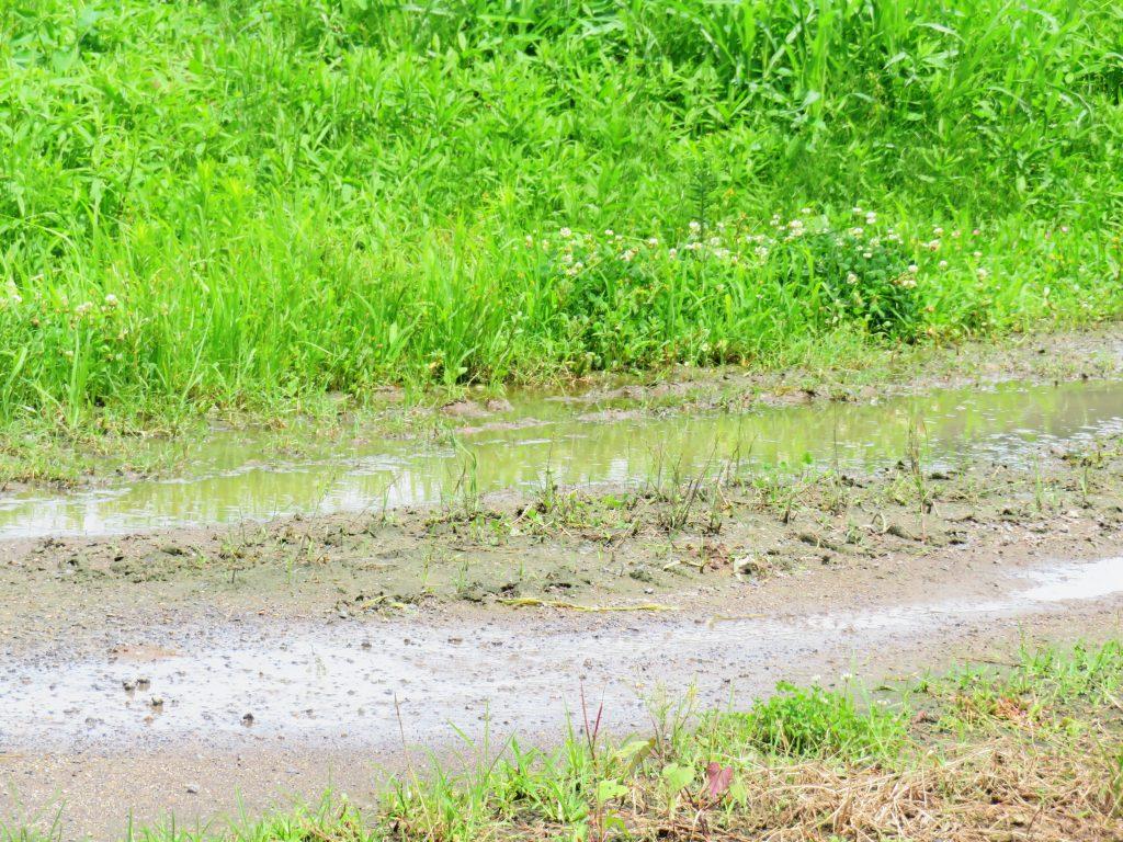 田舎道の水たまり