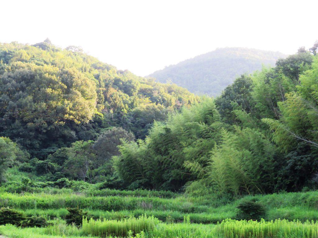 夏の田舎 夕景