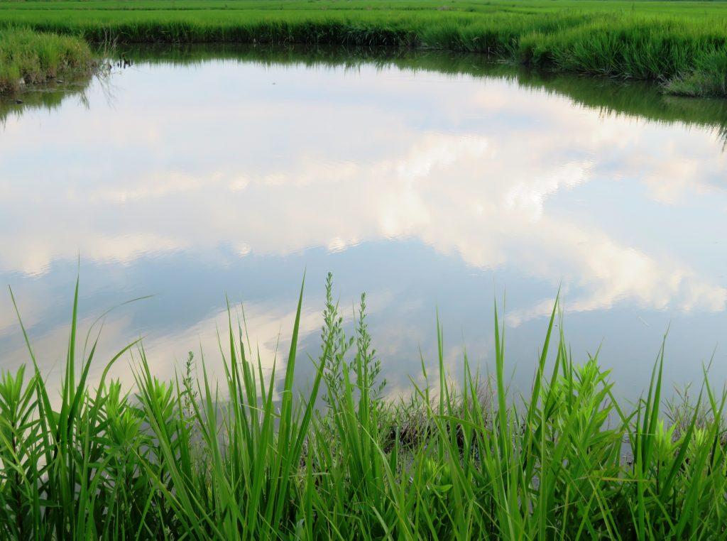 雲を映す水鏡