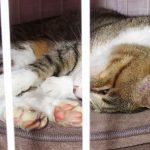 緊急レポート 「風太(猫)がマムシに噛まれました、が無事に元気です」(nya.1391)