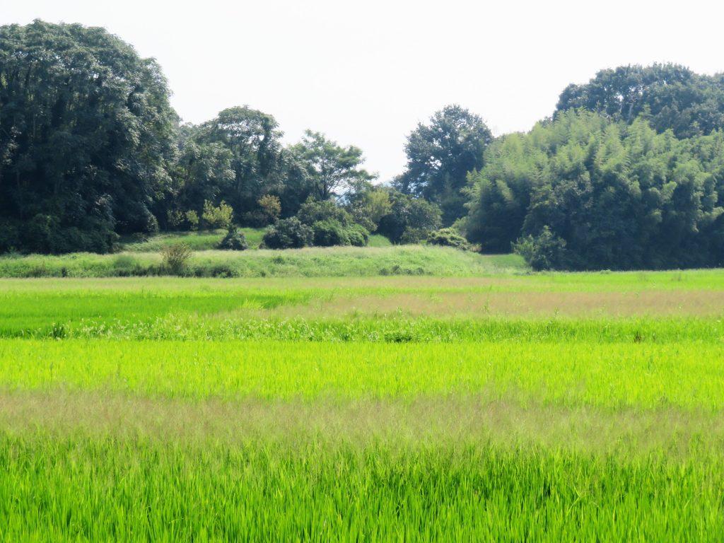 残暑の田舎
