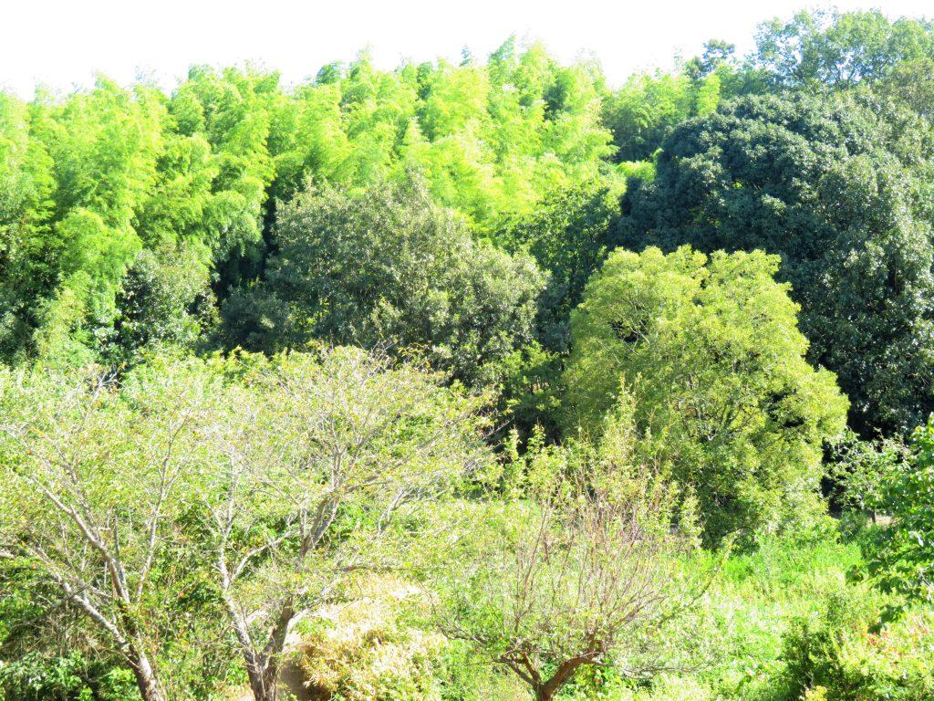 中秋の山の木々