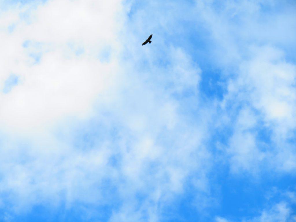 9月の青空と雲