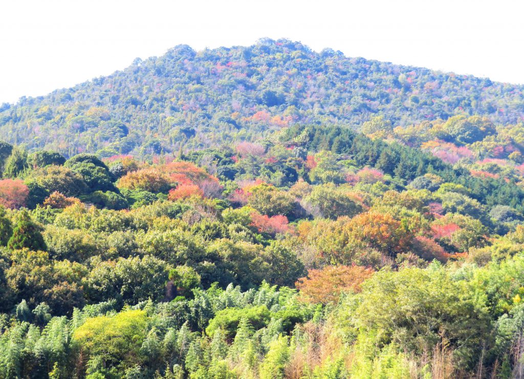 晩秋の山 山桜の紅葉