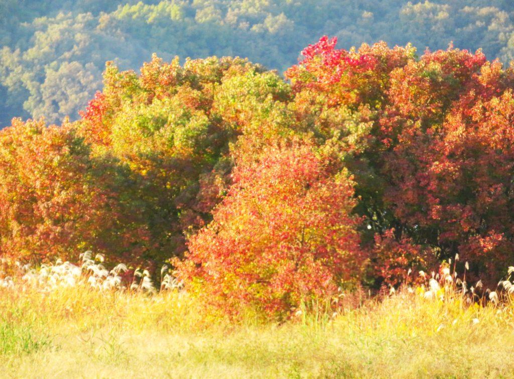 田舎の晩秋
