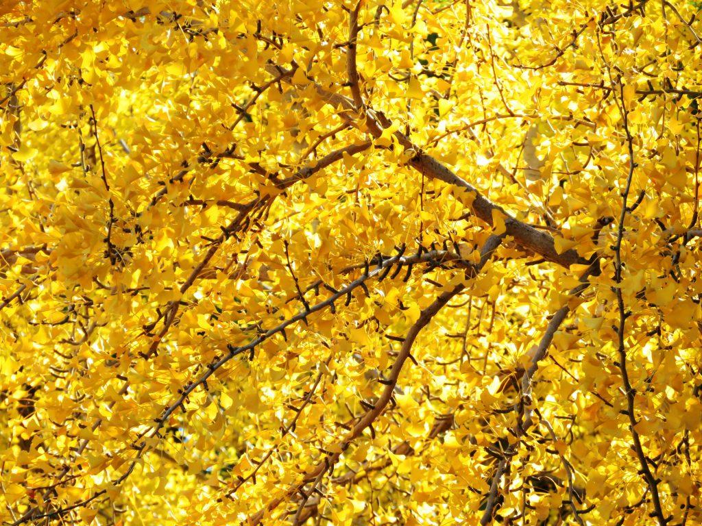 晩秋の公園 紅葉