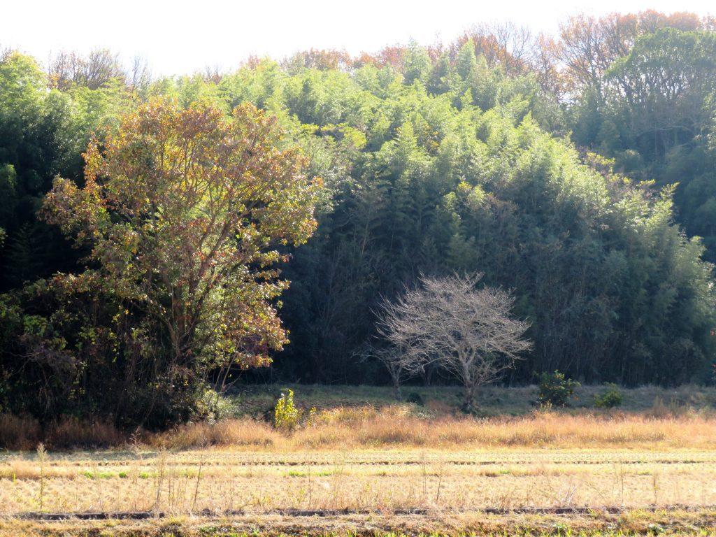 初冬の田舎