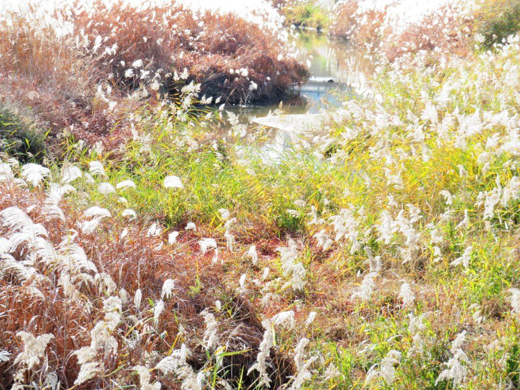 田舎の冬の川