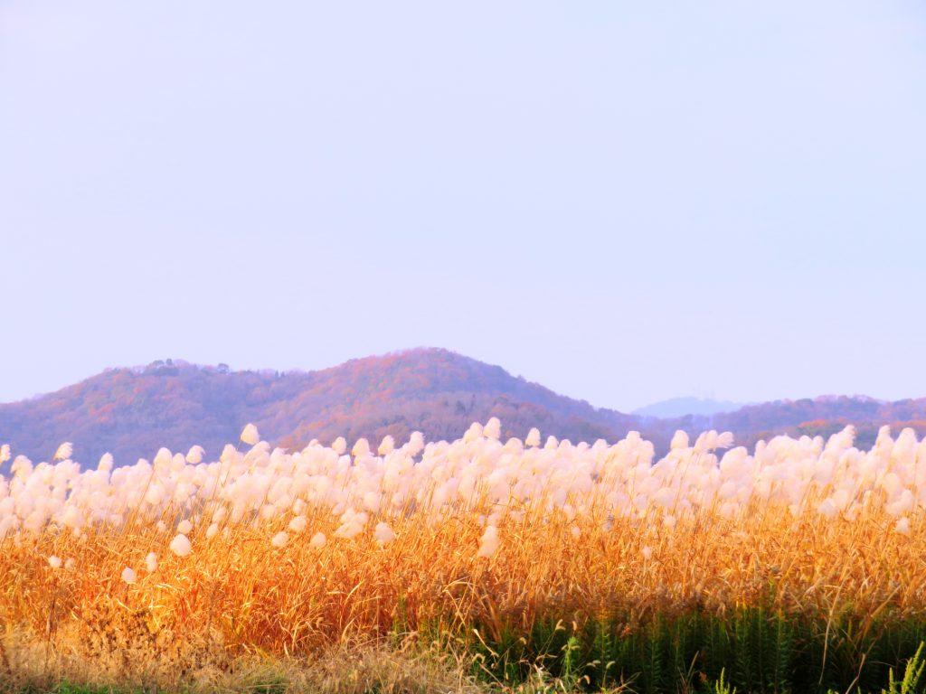 冬の山とススキ