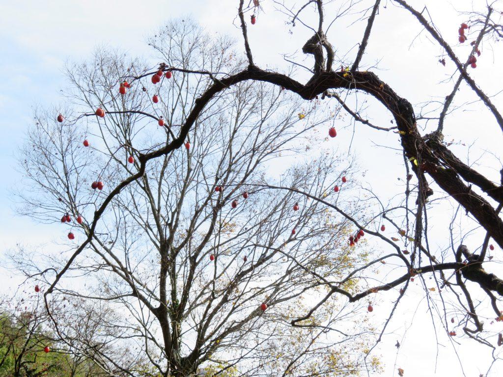 冬の田舎の木々