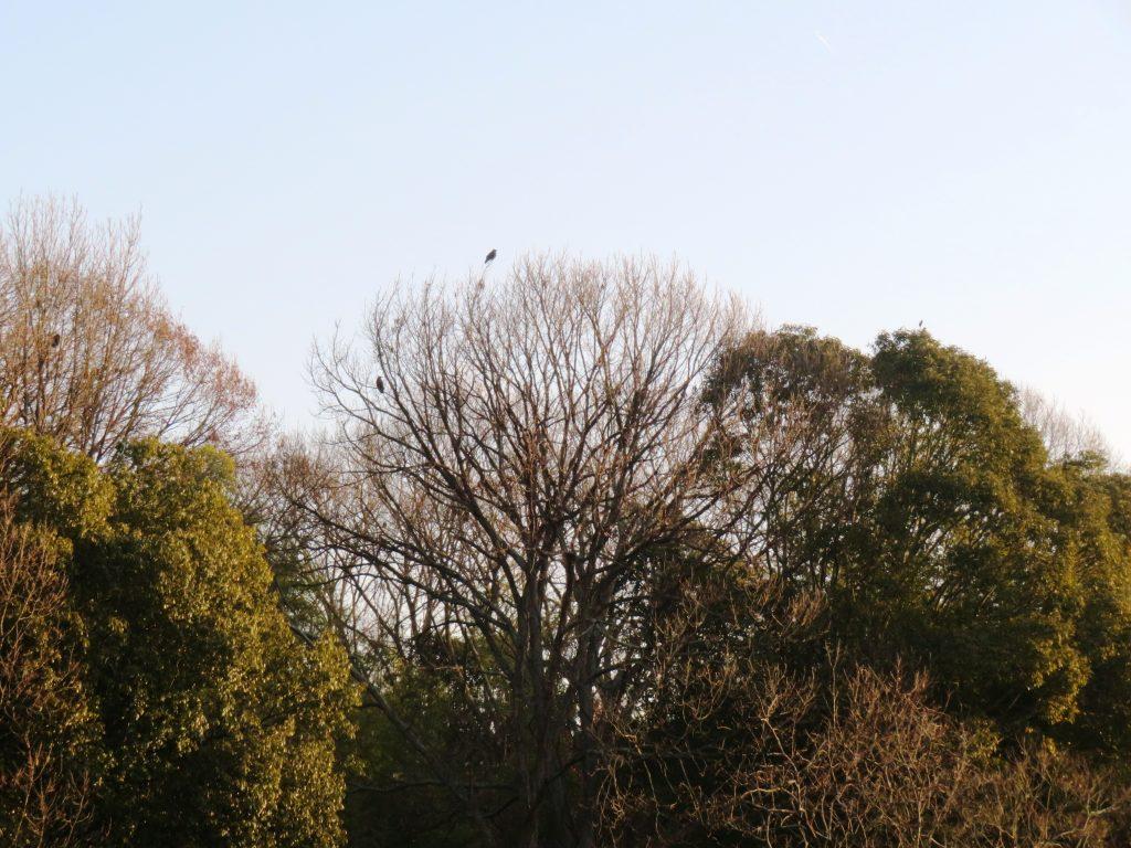 冬の山の木々