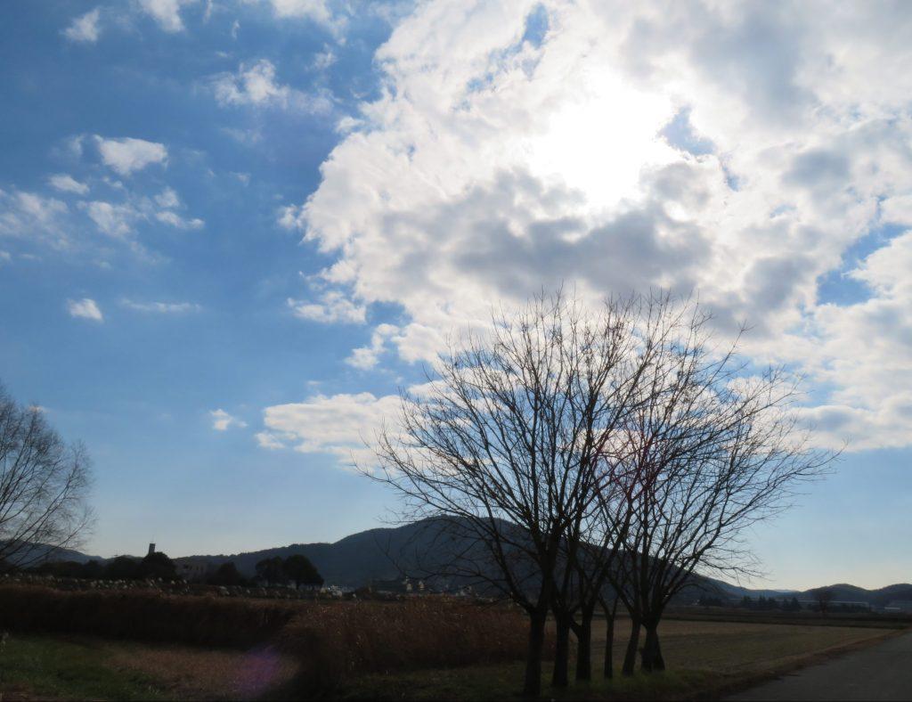 冬の空と裸木