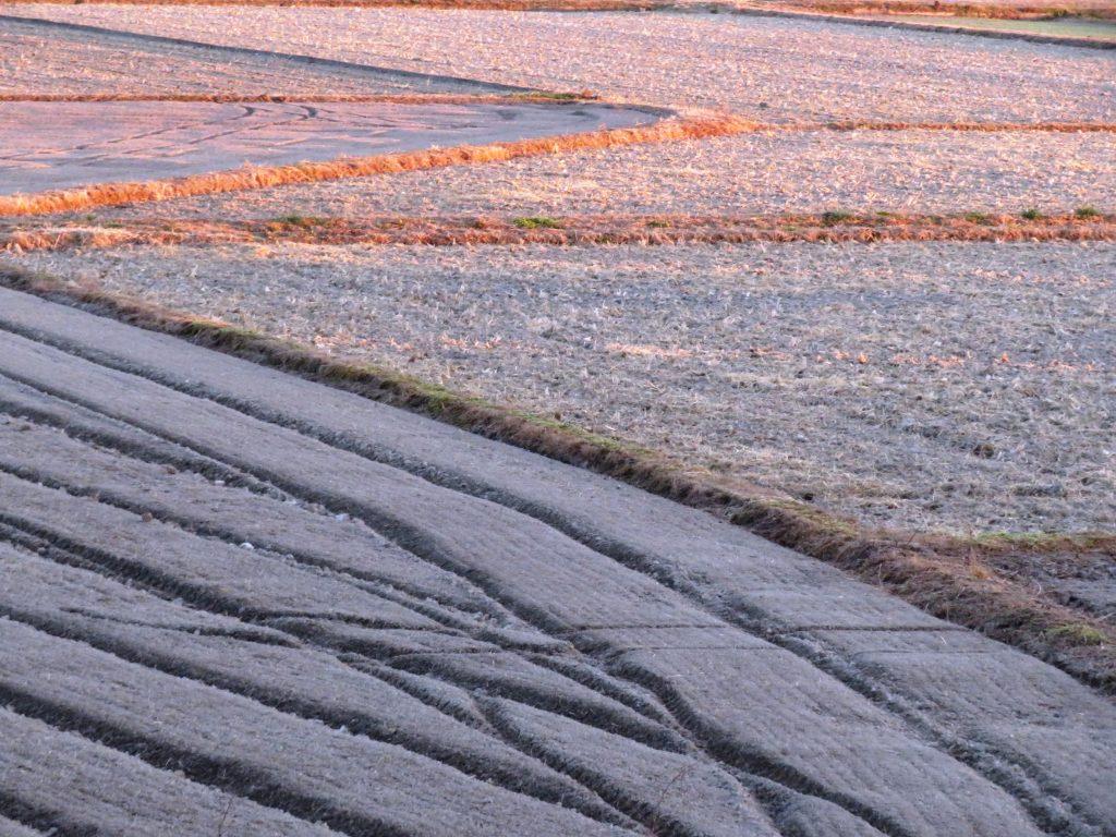 冬の田んぼ 夕景