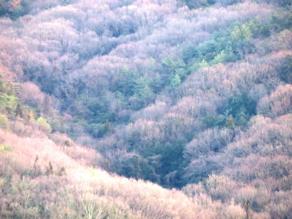 冬の山 夕景