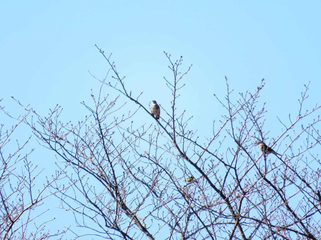 冬の鳥たち
