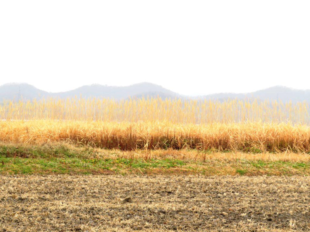 早春の田舎