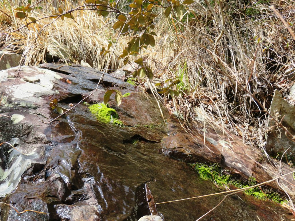 ご近所の山の岩清水