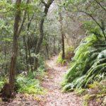 春の山の散歩は、薄曇りが必須条件ですね。 (nya.1601)