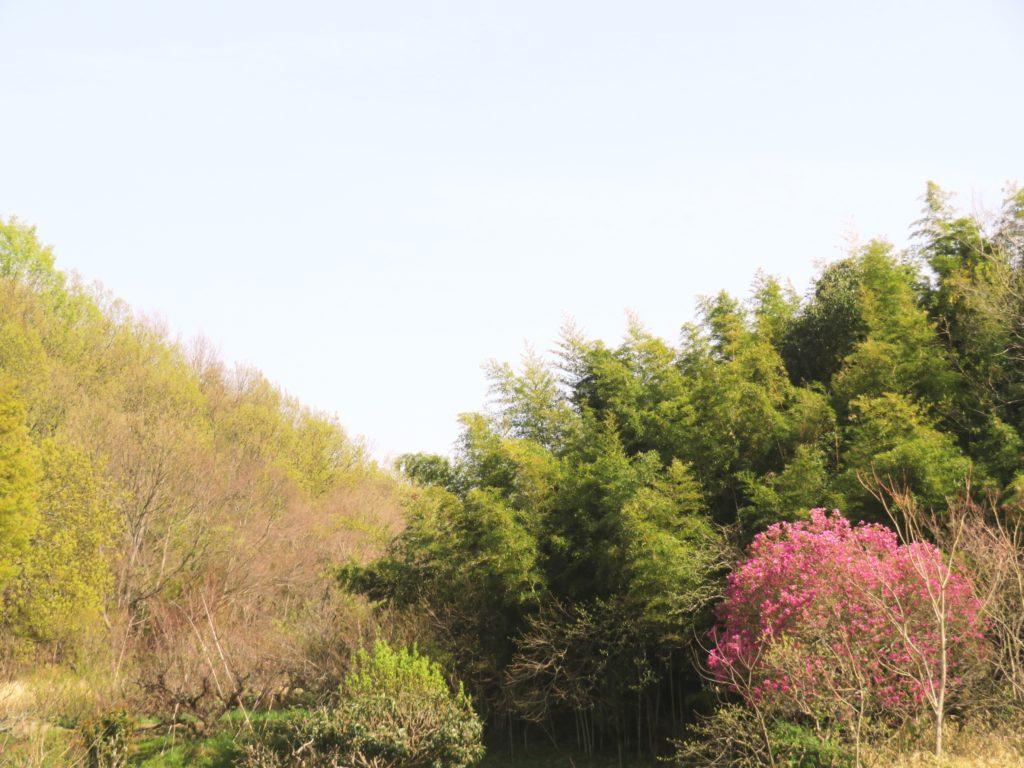 木蓮と芽吹きの山