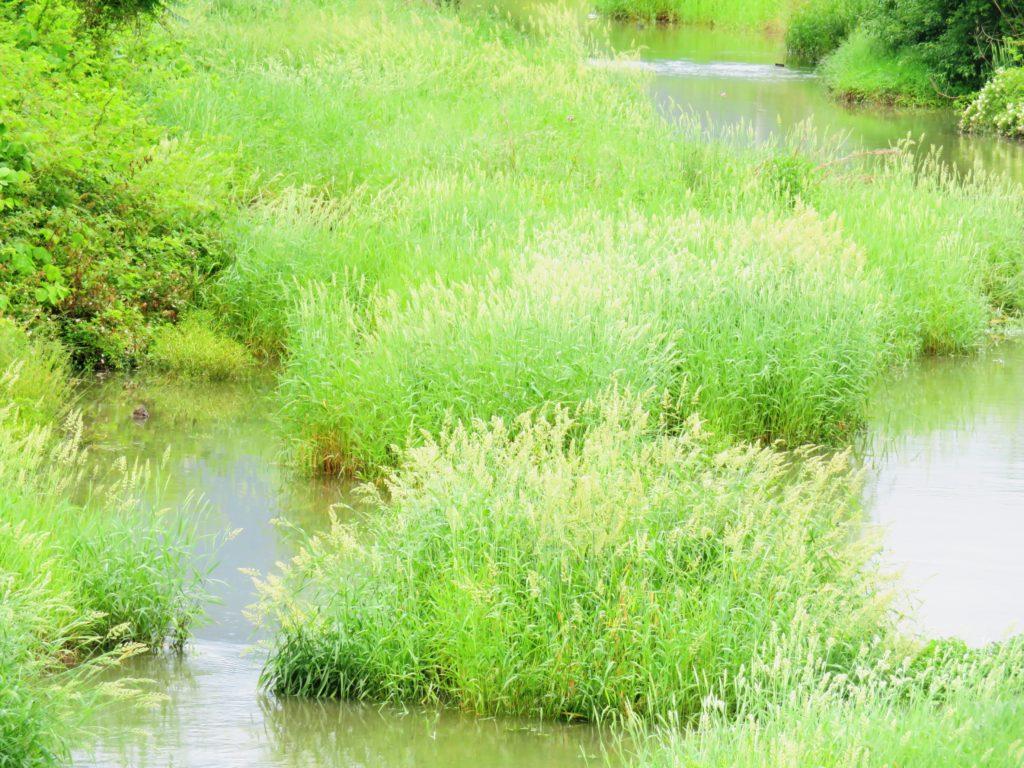 雨上がりの初夏の川辺