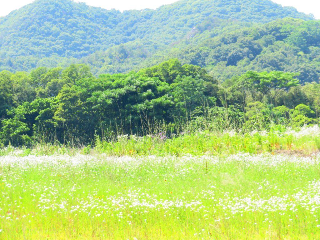 仲夏の田舎
