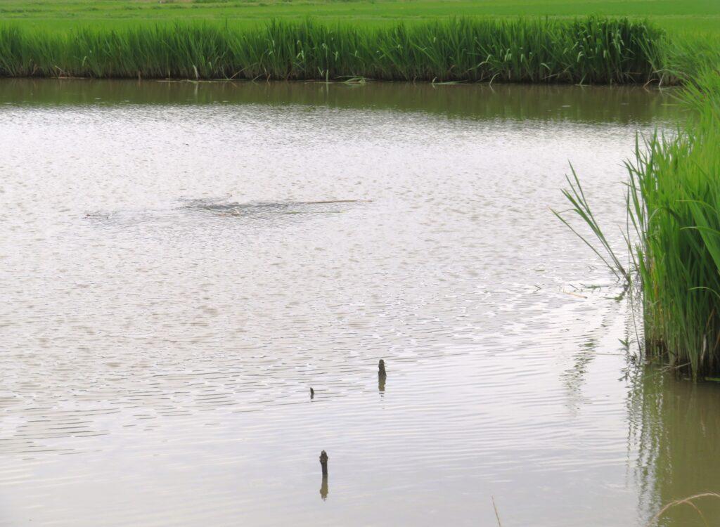 風の強い日の池