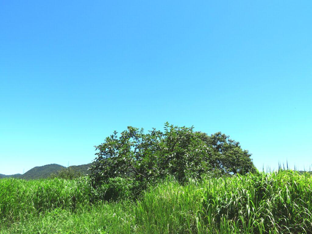 柿と栗の木