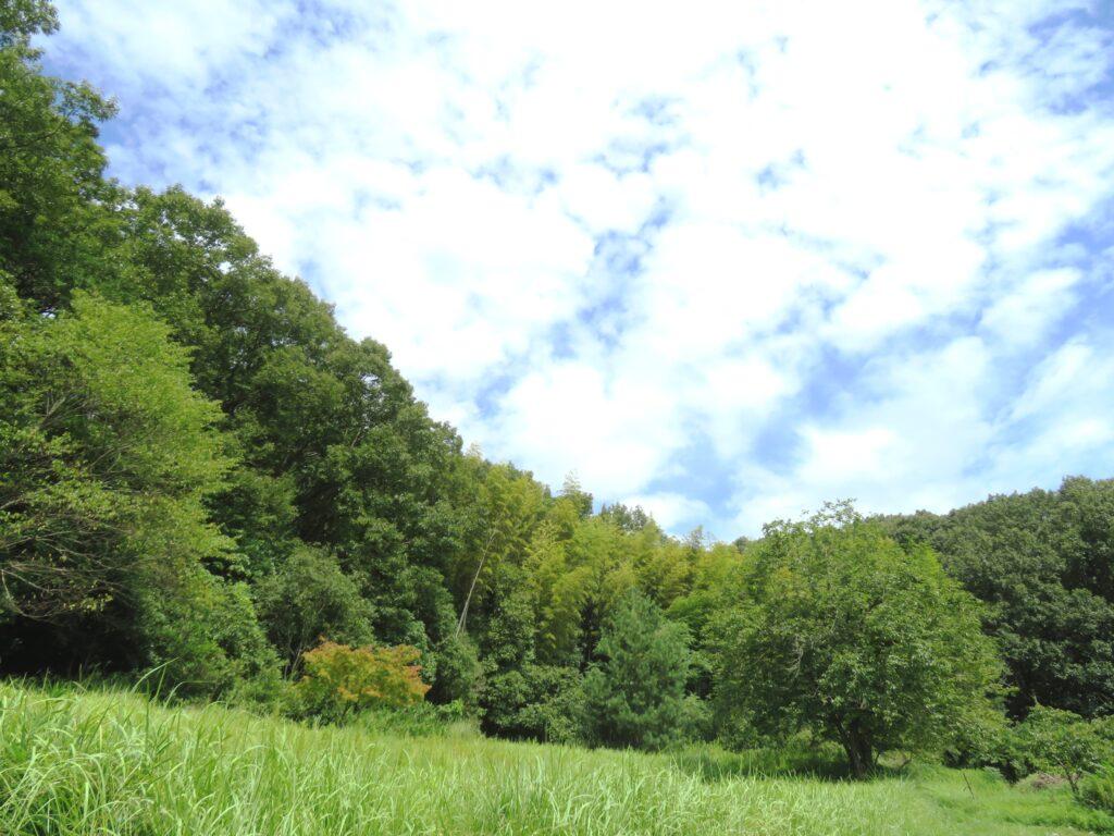 初秋の田舎